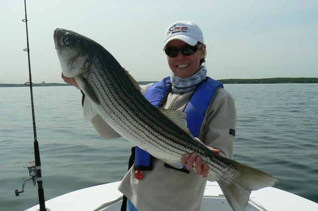 Striped Bass Fishing at it Best - Fishing Charters RI with Captain John Sheriff