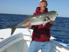 Block Island Bluefish
