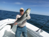 Block Island Bluefish Fishing