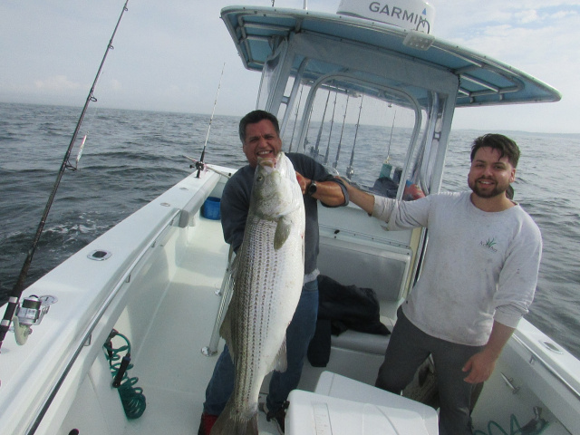 55 lb Striper caught fishing aboard - with Captain John Sherriff